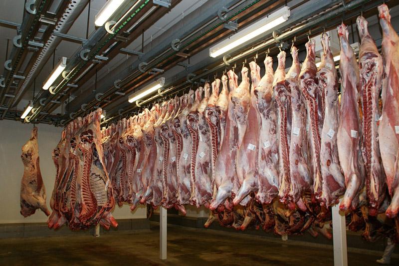 abattoir-butchered-carcasses-cows